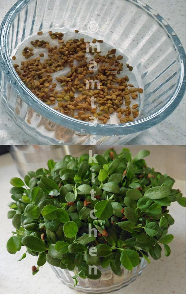 Fenugreek (Methi) Seed Sprouts And Red Onion Salad
