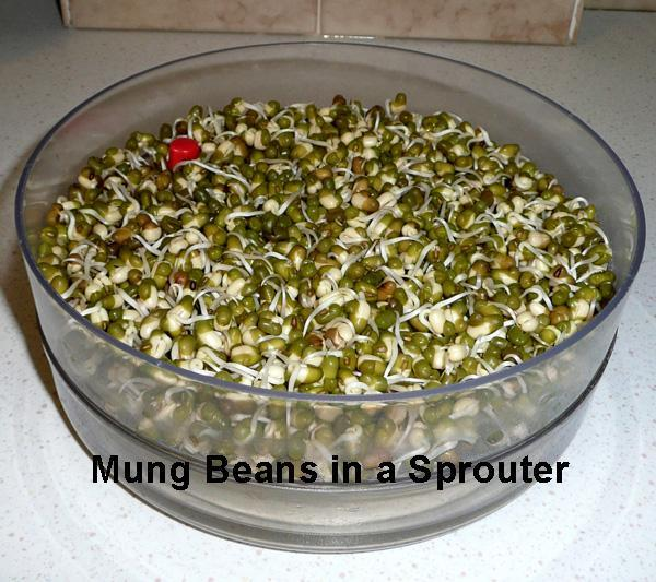 How To Sprout Beans, Lentils, Peas & Seeds?