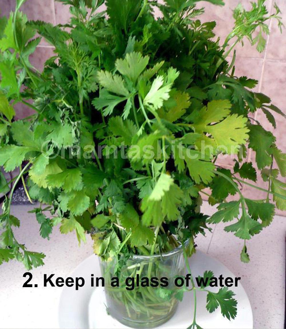 Coriander (Cilantro) Leaves - How to Preserve them?