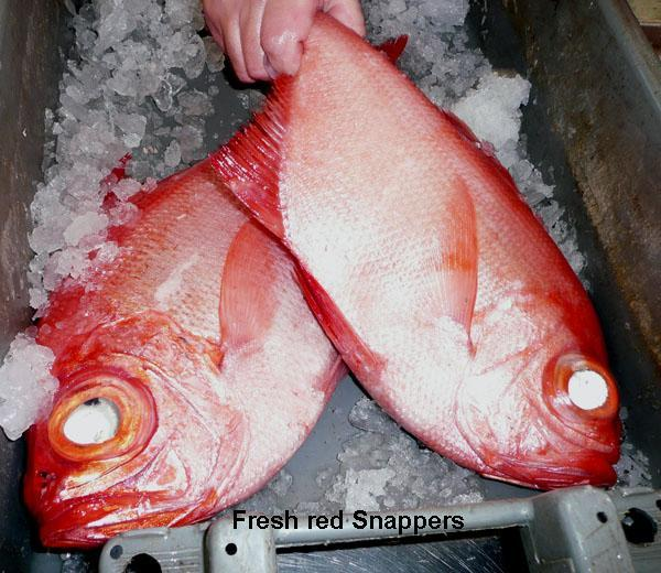 Grilled or Pan-fried or barbecued Red Snapper Fillets